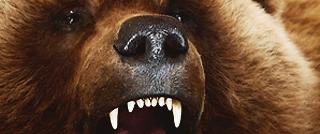 Bjørneskinn